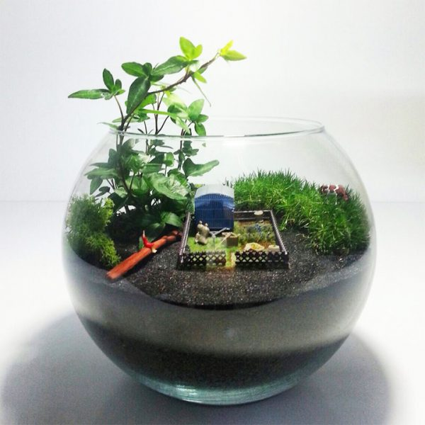 Yeşil Atölye - Çiftlik Konseptli Terrarium