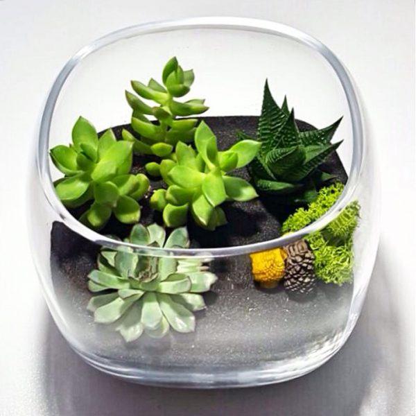 Yeşil Atölye - Özel Kesim Fanus Terrarium