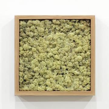 yeşil atölye - yosun tablo