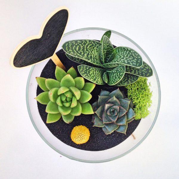 Yeşil Atölye - Üçlü Terrarium