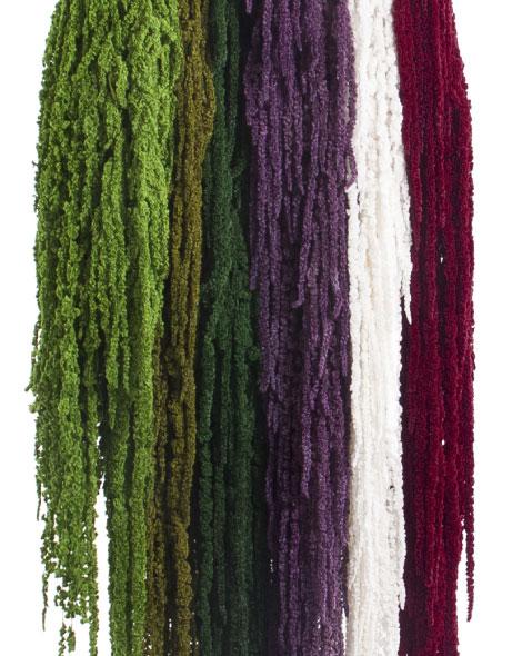 Yeşil Atölye - Şoklanmış Yaprak - Amaranthus