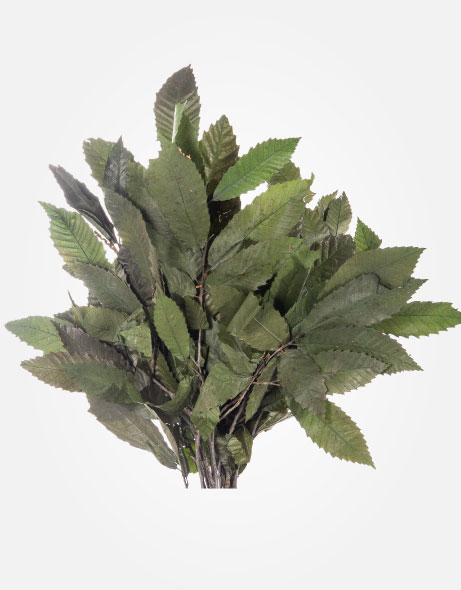 Yeşil Atölye - Şoklanmış Yaprak - Chestnut Branches