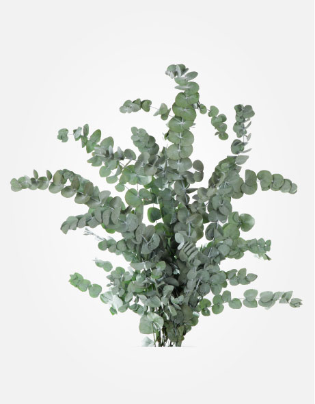 Yeşil Atölye - Şoklanmış Yaprak - Cinerea