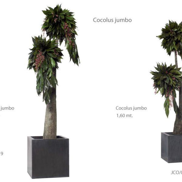 Yeşil Atölye - Şoklanmış Bitkiler - Cocolus Jumbo