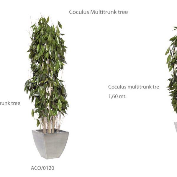 Yeşil Atölye - Şoklanmış Bitkiler - Coculus Multitrunk Tree
