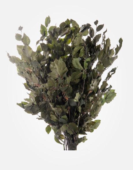 Yeşil Atölye - Şoklanmış Yaprak - Fagus