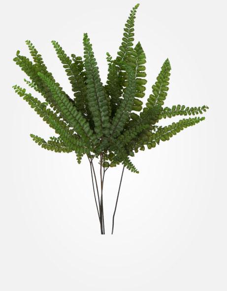 Yeşil Atölye - Şoklanmış Yaprak - Felci Fern