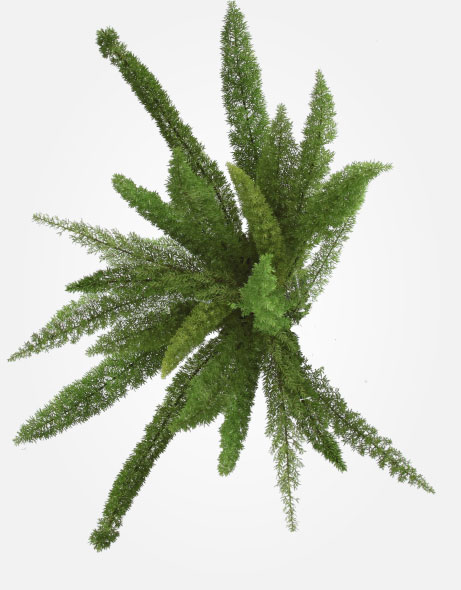 Yeşil Atölye - Şoklanmış Yaprak - Fox Tail