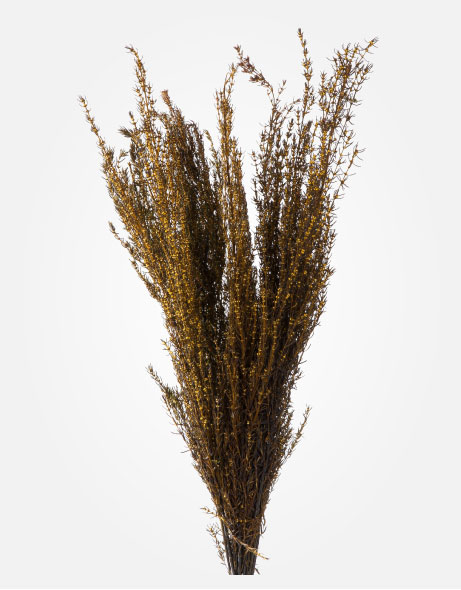 Yeşil Atölye - Şoklanmış Yaprak - Grabia