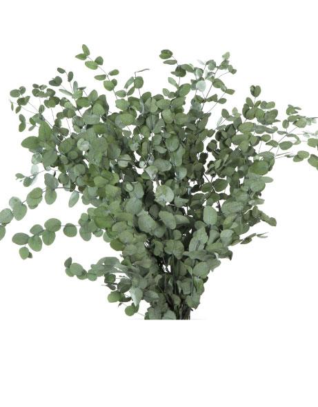 Yeşil Atölye - Şoklanmış Yaprak - Gunny