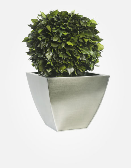 Yeşil Atölye - Şoklanmış Bitkiler - Hedera Topiary
