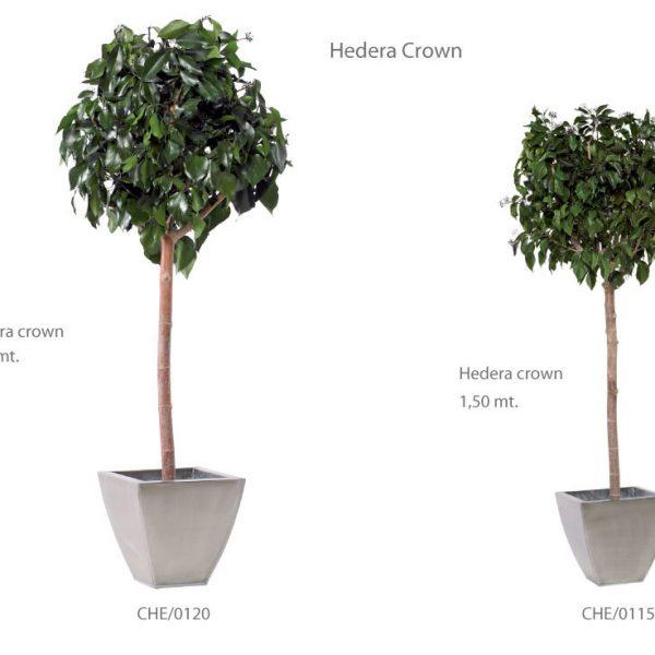 Yeşil Atölye - Şoklanmış Bitkiler - Hedera Crown