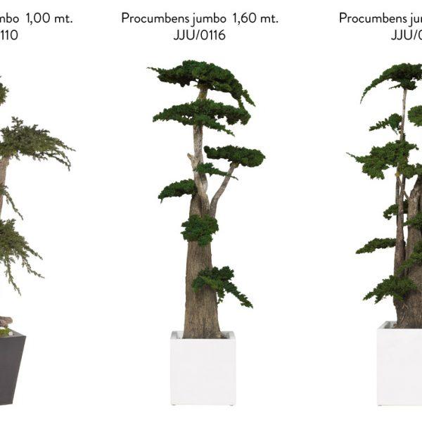 Yeşil Atölye - Şoklanmış Bitkiler - Jumbo Procumbens