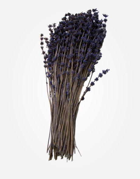 Yeşil Atölye - Şoklanmış Yaprak - Lavender