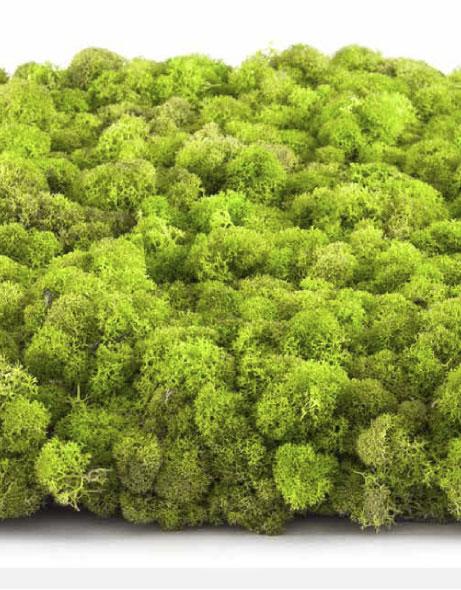 Yeşil Atölye - Şoklanmış Lichen