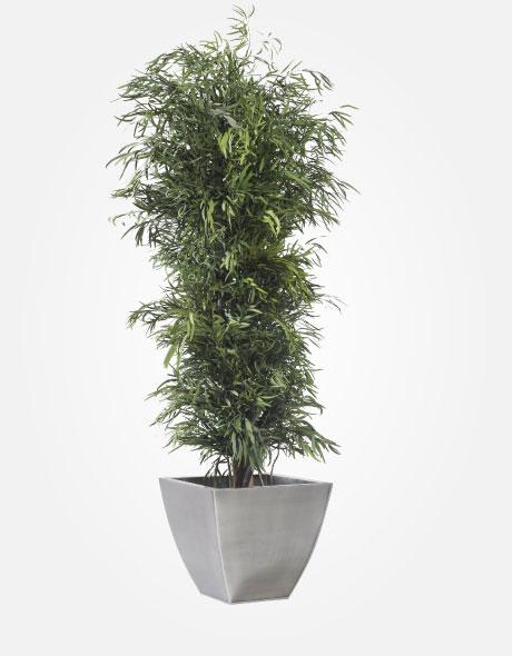 Yeşil Atölye - Şoklanmış Bitkiler - Nicoly Tree