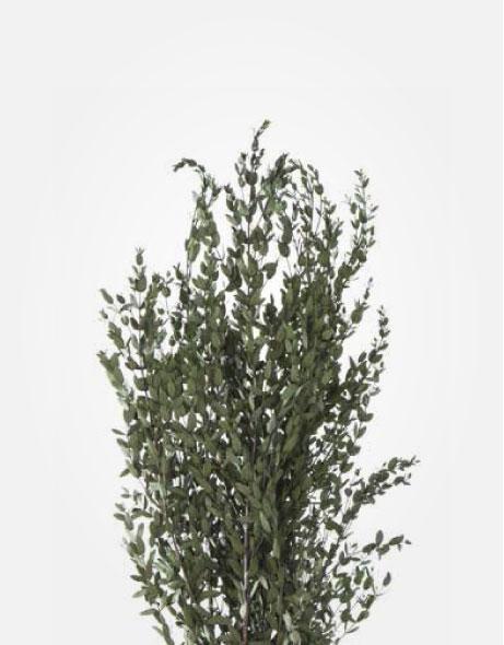 Yeşil Atölye - Şoklanmış Yaprak - Parvifolia