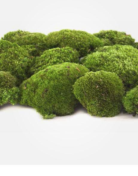 Yeşil Atölye - Şoklanmış Pole Moss