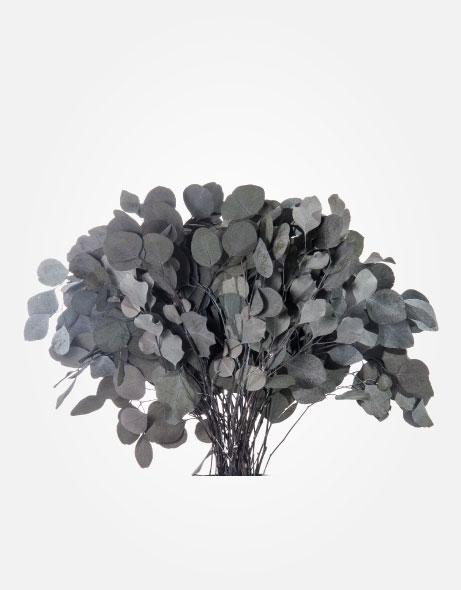Yeşil Atölye - Şoklanmış Yaprak - Populus