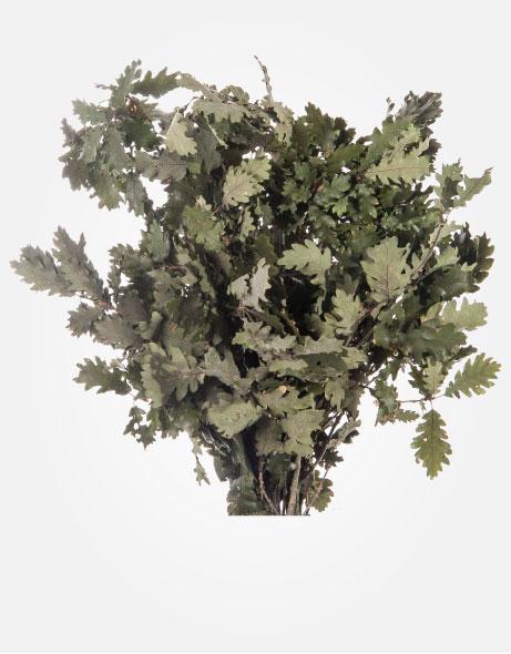 Yeşil Atölye - Şoklanmış Yaprak - Quercus