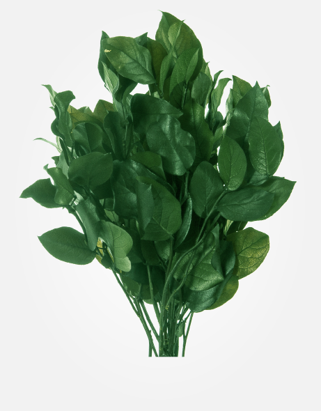Yeşil Atölye - Şoklanmış Yaprak - Salal