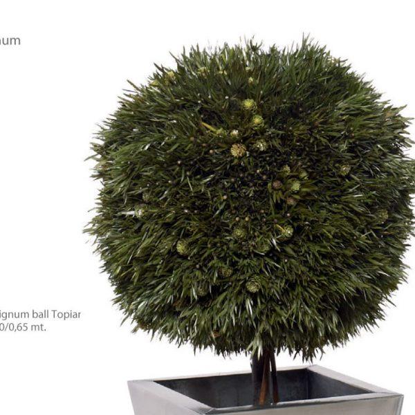 Yeşil Atölye - Şoklanmış Bitkiler - Salignum