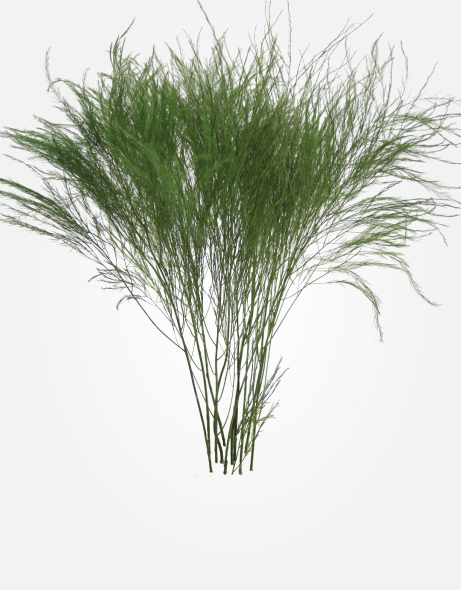Yeşil Atölye - Şoklanmış Yaprak - Tree Fern