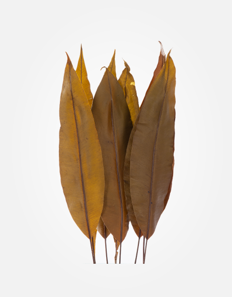 Yeşil Atölye - Şoklanmış Yaprak - Tropical Leaves