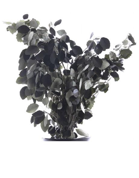 Yeşil Atölye - Şoklanmış Yaprak - White Poplar