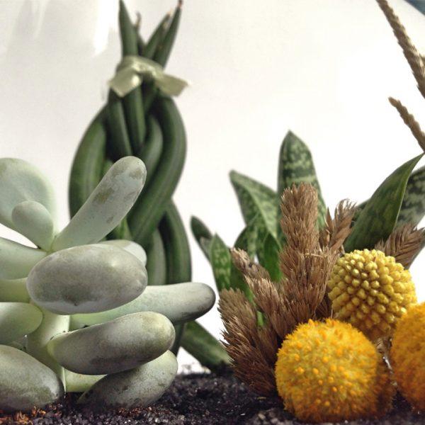 Yeşil Atölye - Armut Terrarium