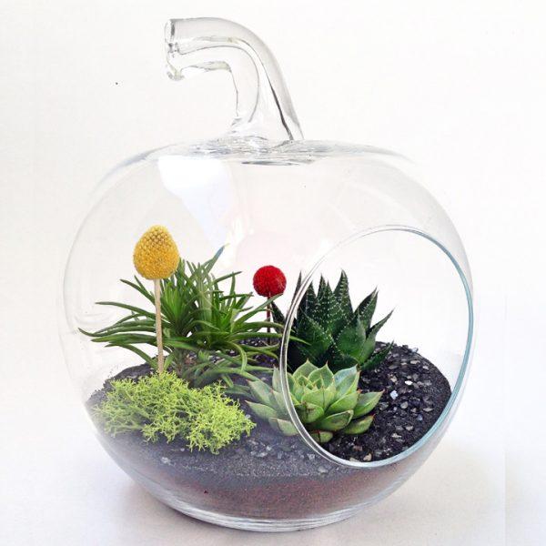 Yeşil Atölye - Elma Terrarium