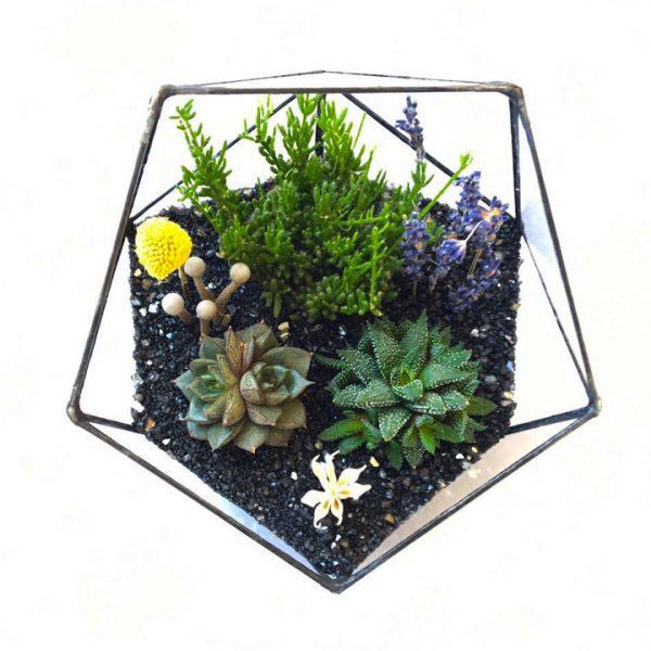 Yeşil Atölye - Beşgen Geometrik Terrarium