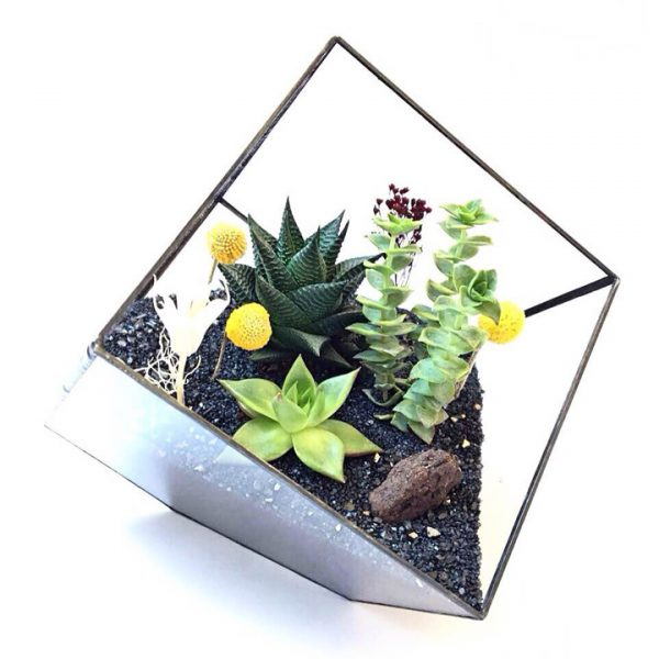 Yeşil Atölye - Geometrik Küp Terrarium – Küçük