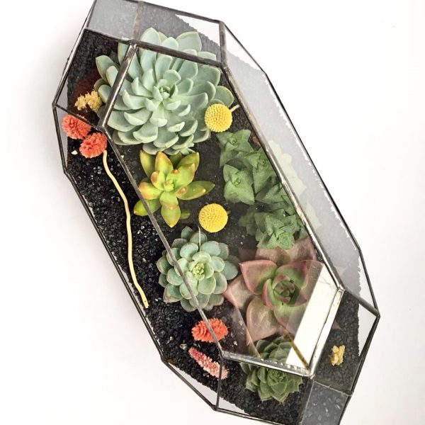 geometrik terrarium, geometrik petek terrarium, terrarium, interior design, architecht ,bitki, sukkulent, cactus, yeşil atölye, iç mekan bitki,