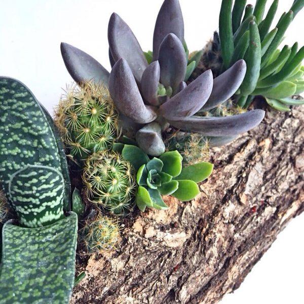 ortanca-odunn-1 yeşil atölye